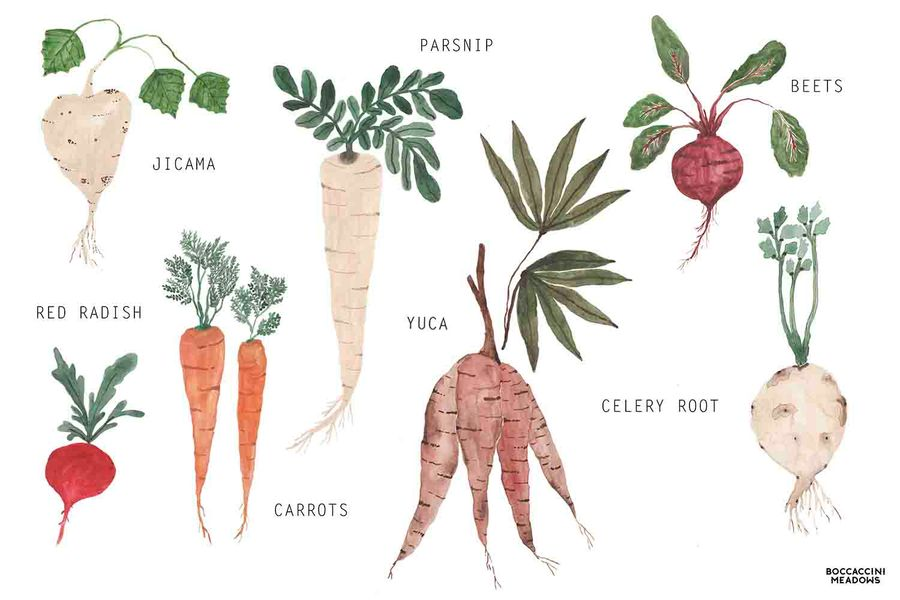 Root Vegetables: The Underground Economy