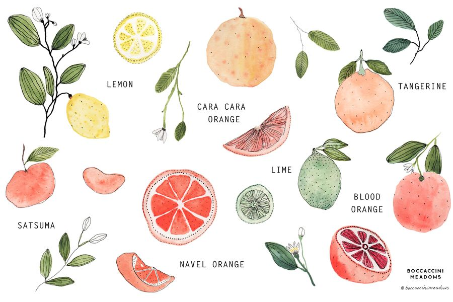 Our Guide to Winter Citrus
