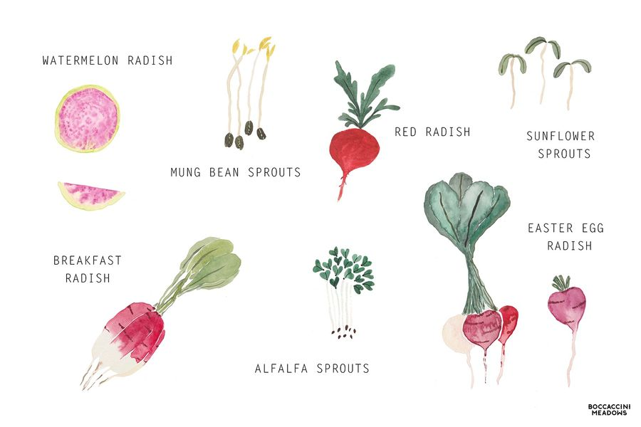Spring Market Watch: Radishes & Sprouts